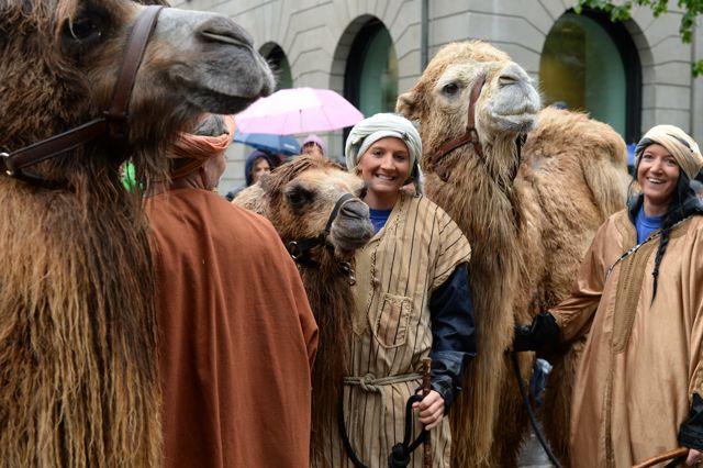 Kamele bei den Kämbels